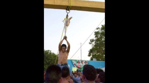 noticias nacionales profepa denuncia maltrato animal en yucatán