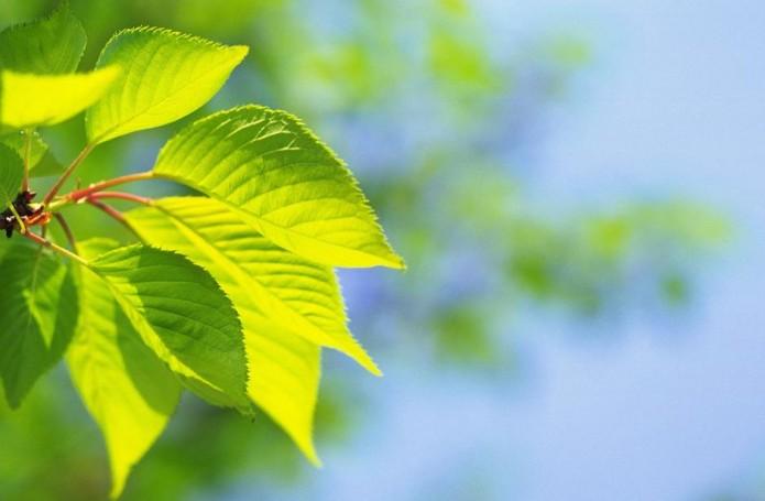 noticias vida y estilio dia mundial del medio ambiente