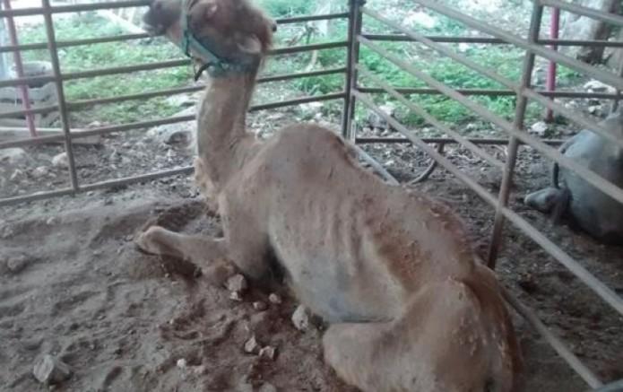 noticias nacional rescatan a 20 animales abandonados