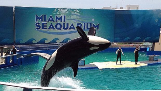noticias internacional ongs piden liberar a orca