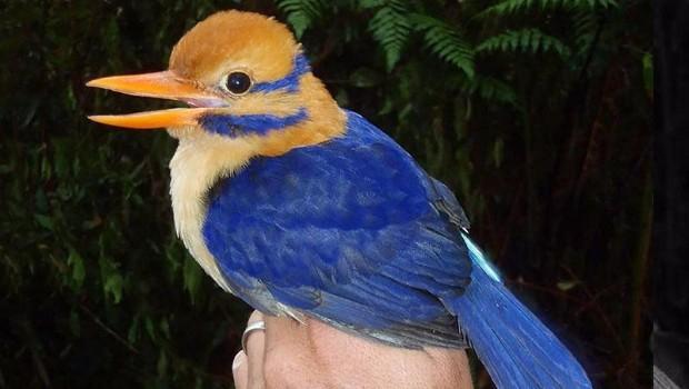 Científicos retratan a una de las aves más raras del mundo... y después la matan