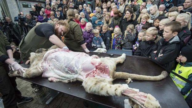 Zoo danés disecciona a un león en público, pese a protestas