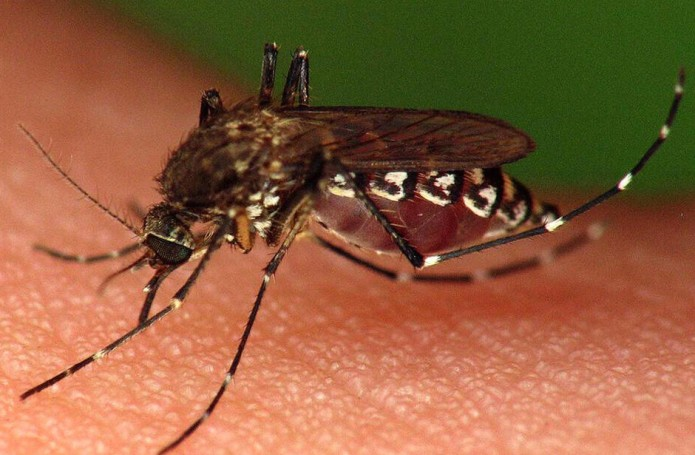 dengue_1