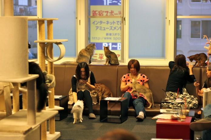 Durante el periodo de prueba, sólo los gatos que superen el año de edad y puedan tomarse un descanso, estarán hasta 12 horas en dichos establecimientos.
