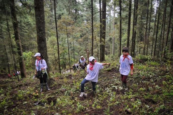 La demanda de aguacate deriva en deforestación