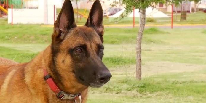 Maya, la perra rescatista- Gregorio Martínez.