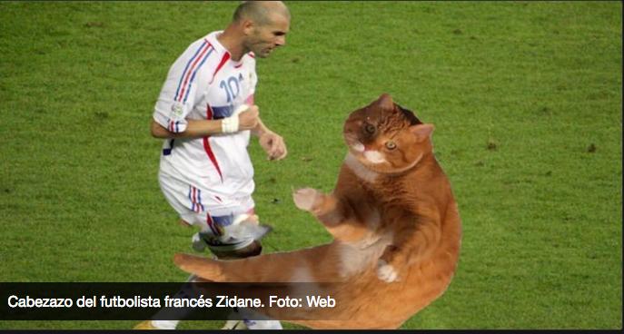 El gato futbolista- Gregorio Martínez.