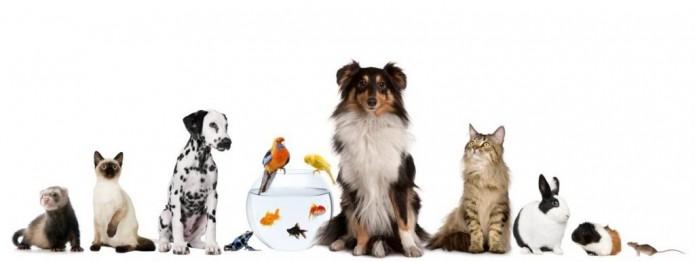 Registra tus mascotas en Locatel- Gregorio Martínez.Registra tus mascotas en Locatel- Gregorio Martínez.