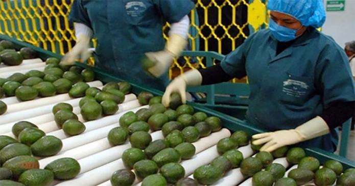 Exportaciones agropecuarias aumentan 13.7%