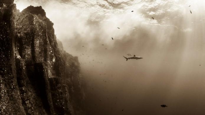 Mexicano gana tercer lugar en concurso mundial de fotografía