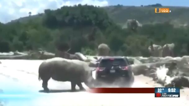 #Video del rinoceronte atacando la camioneta en la que viajaba una familia dentro de un zoológico