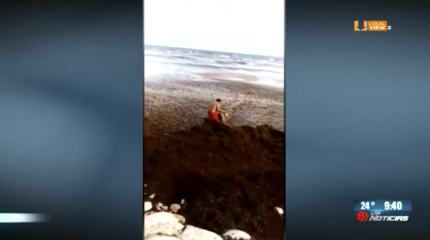 Sargazo a niveles extremos. Una turista estuvo a punto de morir en Playa del Carmen